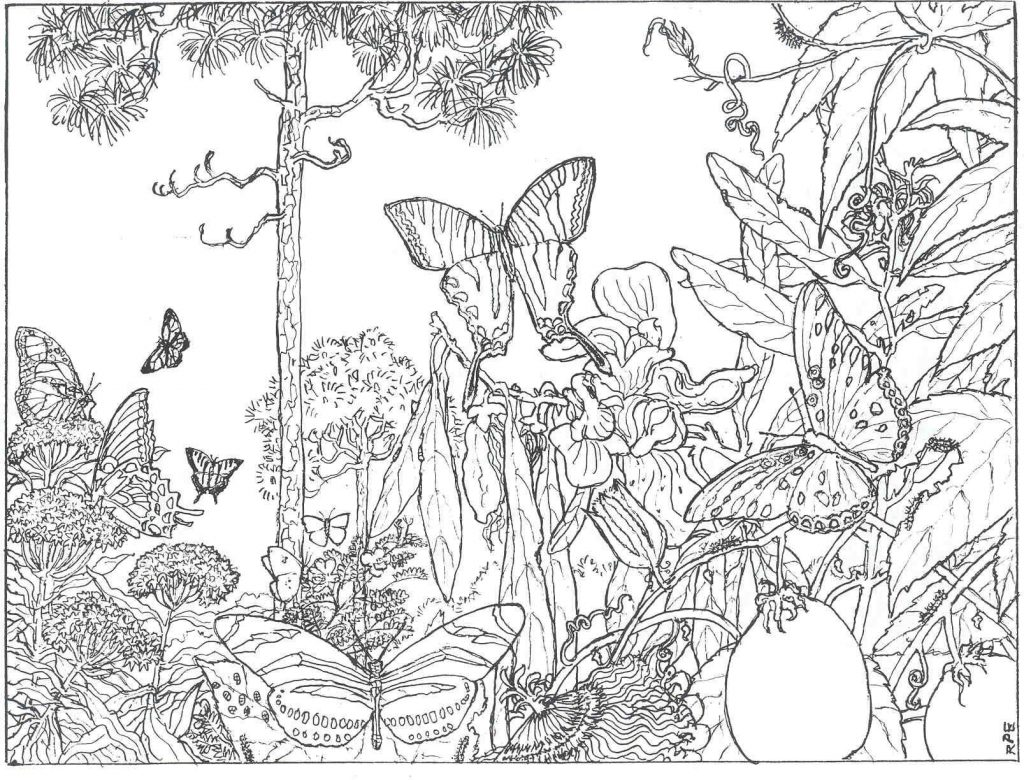Butterfly Scene Coloring Pages for Adults