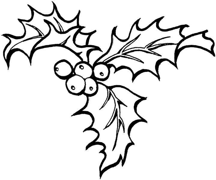 Holly Coloring Pages Free