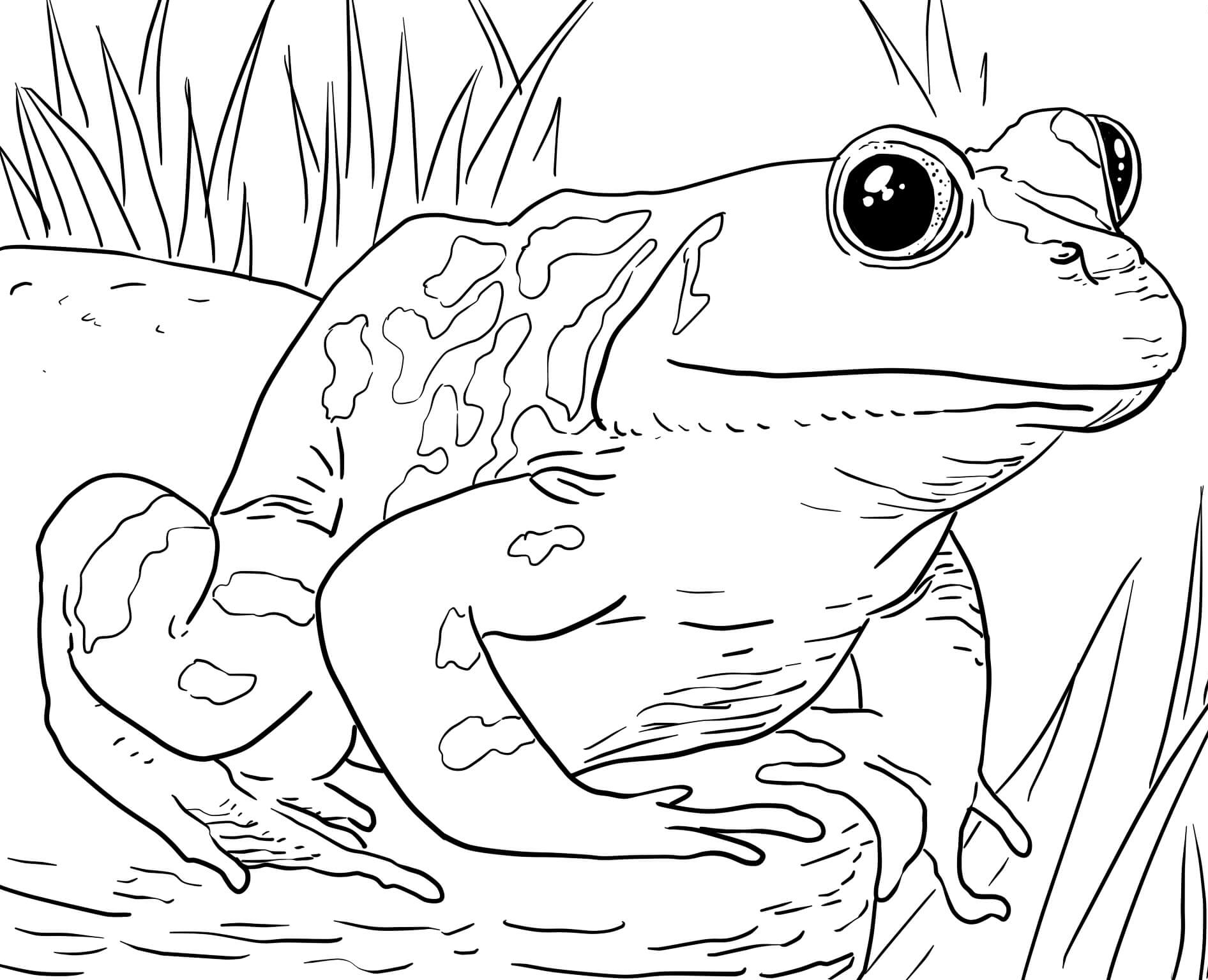 Zoo Animals Coloring Pages - Best Coloring Pages For Kids