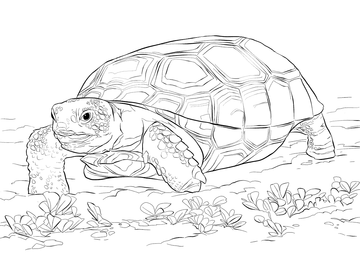 Galapagos Islands Coloring Book Dover Publications | Coloriage ... | 900x1200