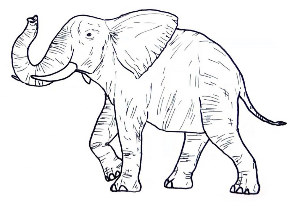 Wild Animal Coloring Pages - Elephant