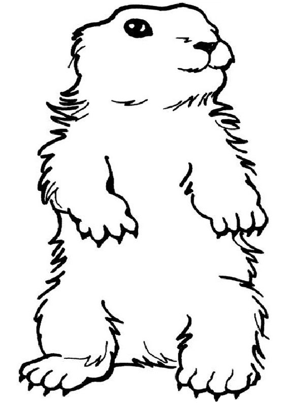 woodchuck coloring pages for kids - photo#21