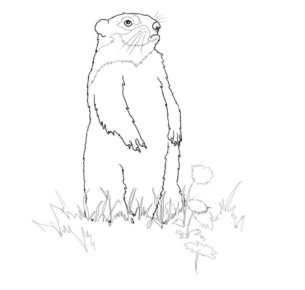 Printable Groundhog Day Coloring Pages