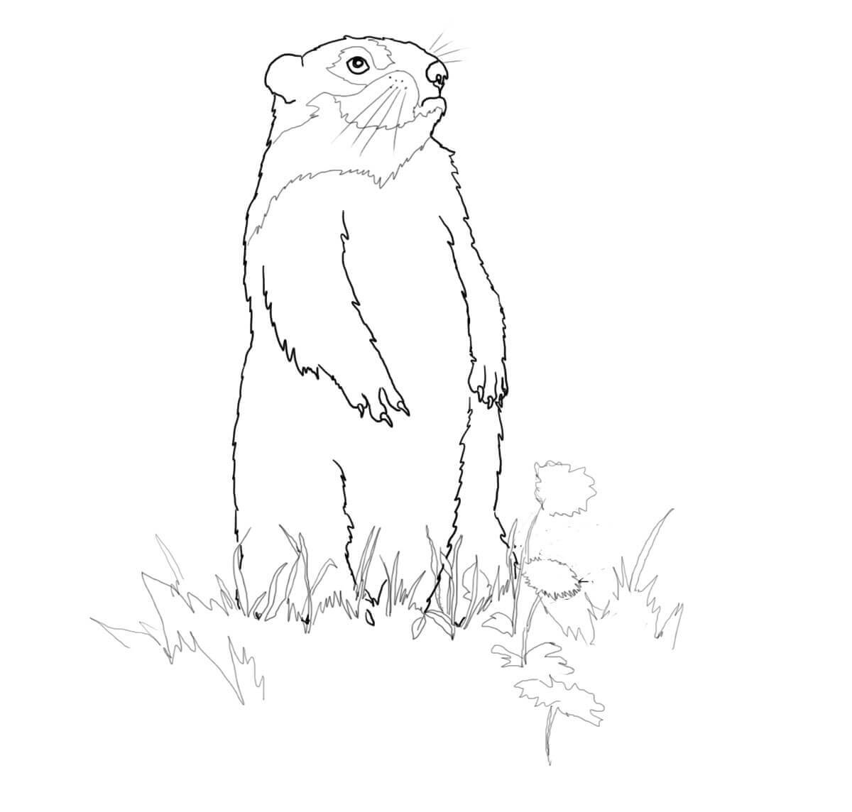 picture regarding Groundhog Printable named Groundhog Coloring Web pages - Perfect Coloring Webpages For Children