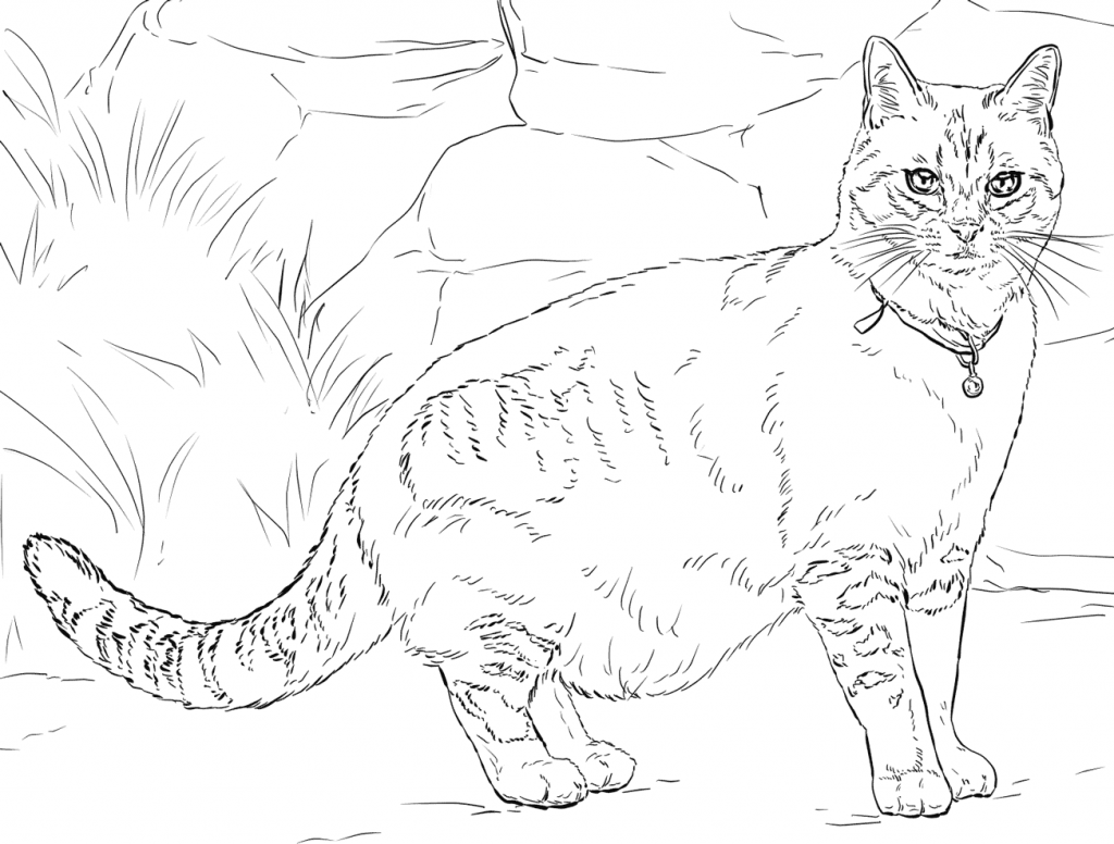 Realist Adult Cat Coloring Page