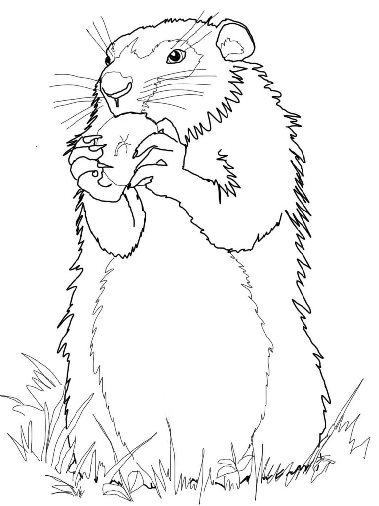 Realistic Groundhog Coloring Page