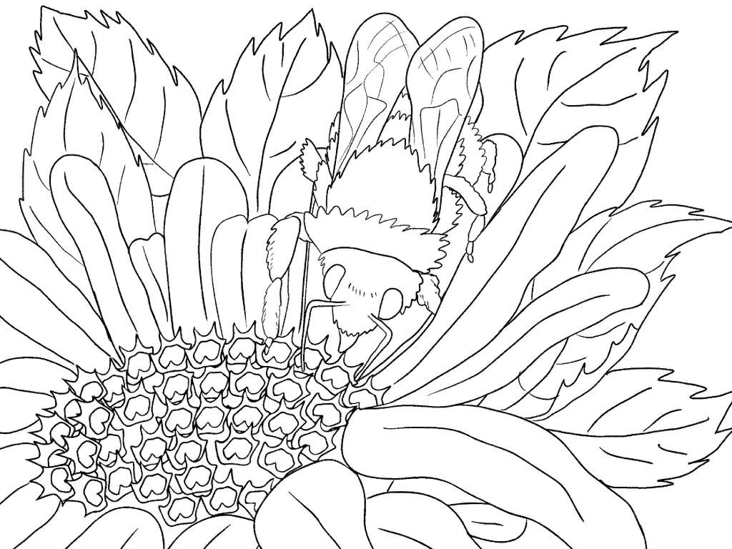 Flower Scenery Coloring Page for Adults