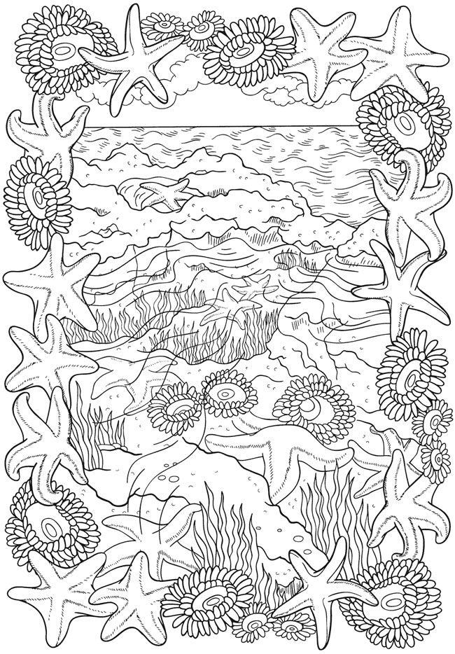 Seashell Scenery Coloring Page for Adults