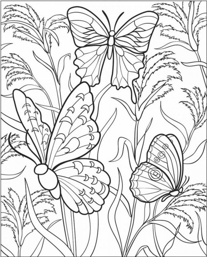 Beautiful Butterfly Coloring Pages for Adults