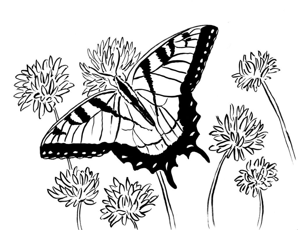 Butterfly and Flowers Adult Coloring Page