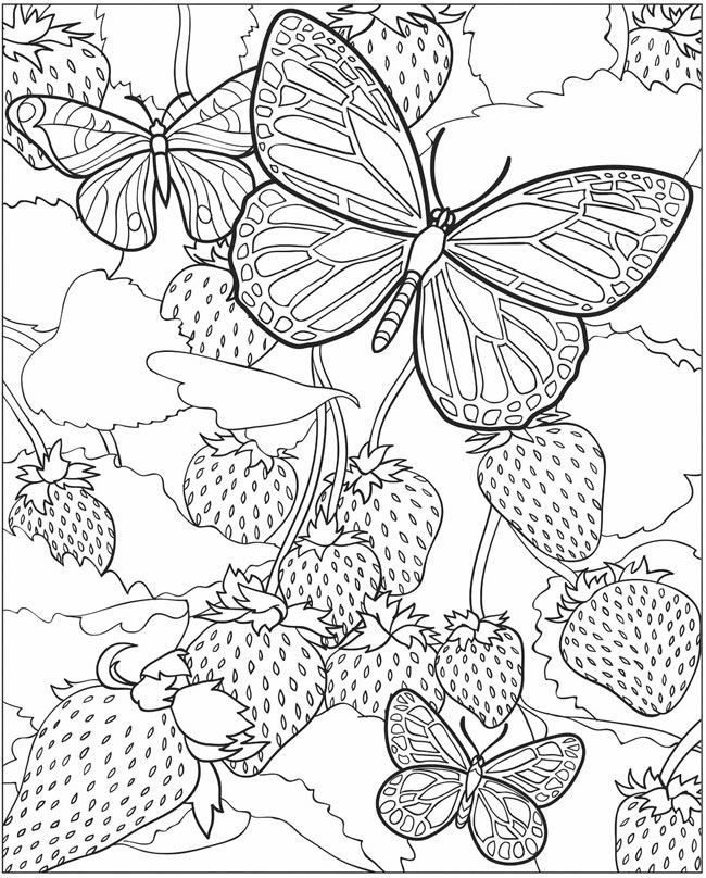 Butterfly and Strawberries Adult Coloring Page