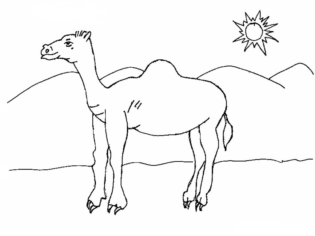 Camel in Desert Coloring Pages