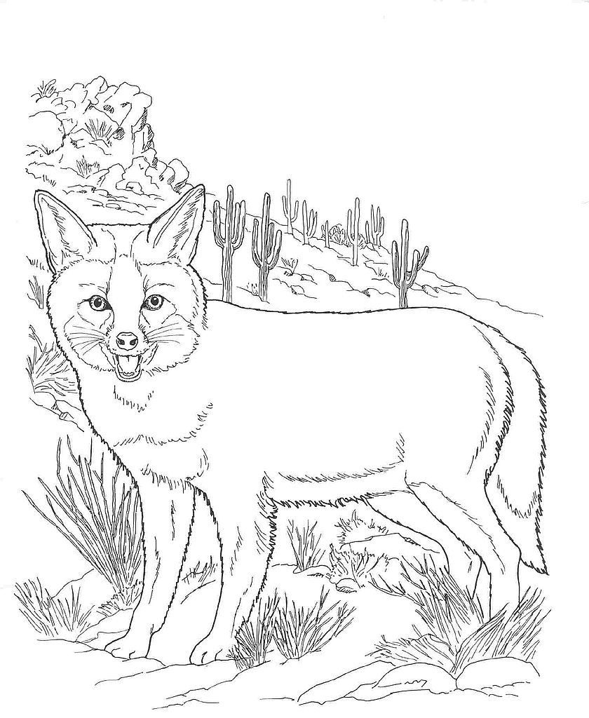 Desert Fox Coloring Page