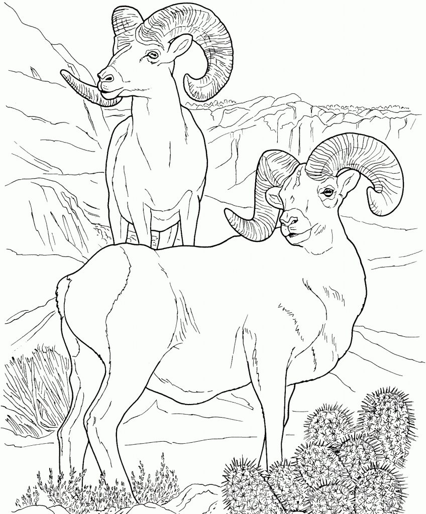 Desert Ram Coloring Pages