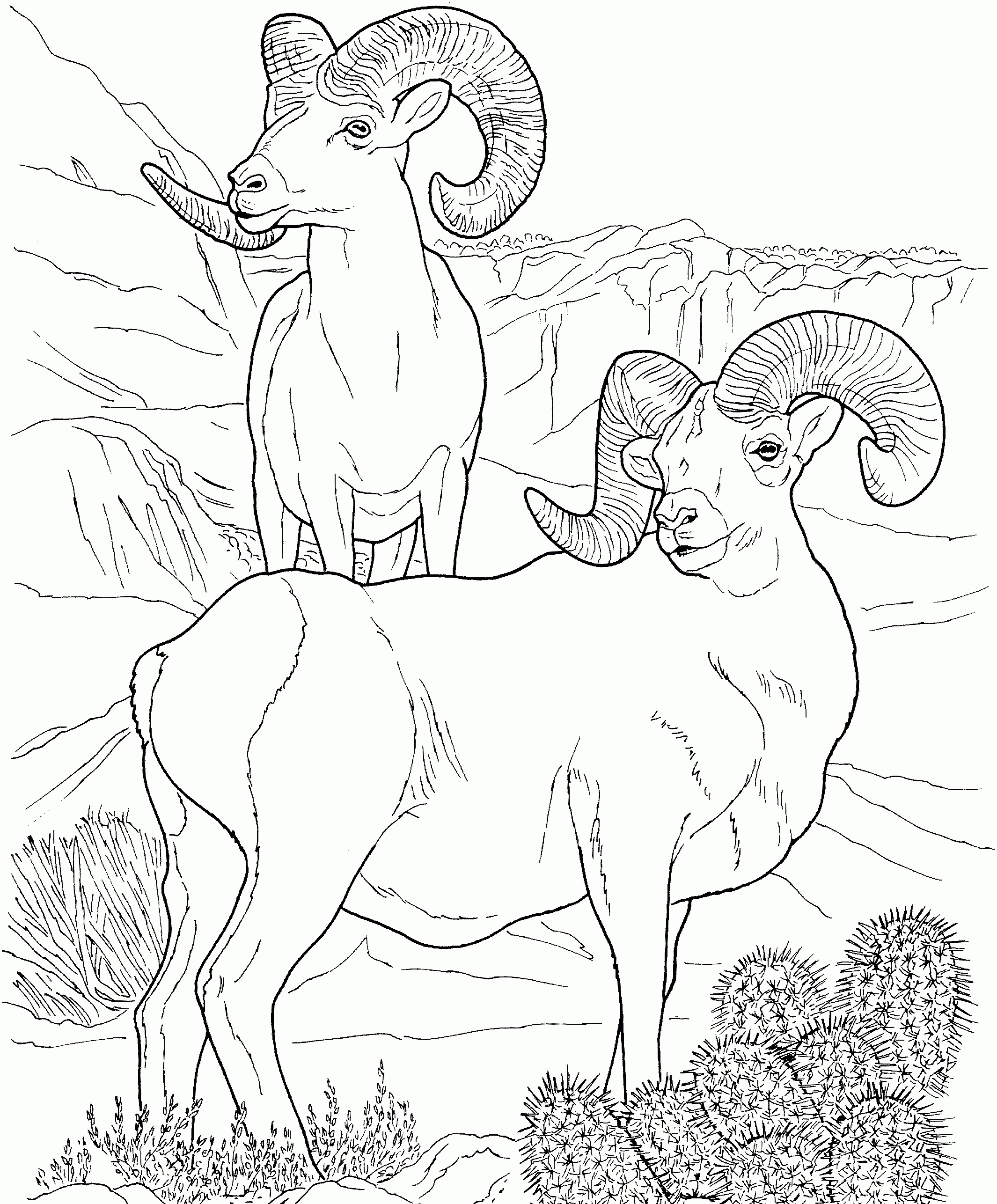 Desert Landscape And Animal Coloring Page For Kids Free Coloring ... | 2572x2130