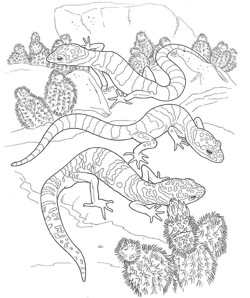 Desert Reptiles Coloring Pages
