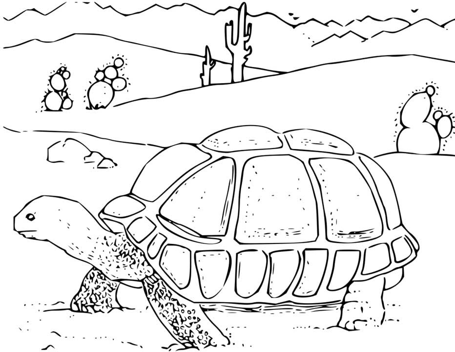 Desert Turtle Coloring Pages