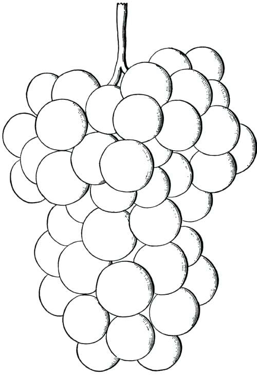 Grapes Coloring Page Printables