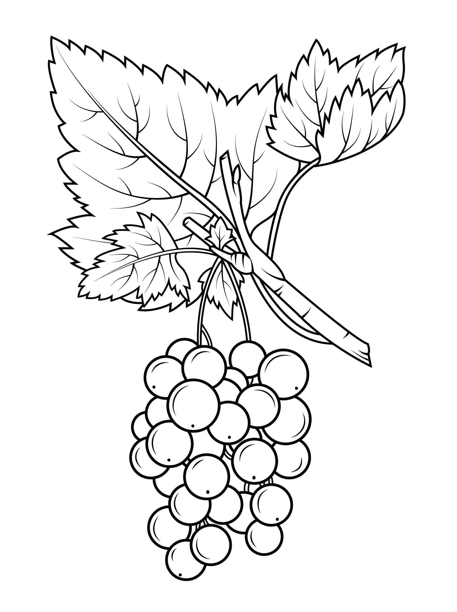 grapes coloring pages best coloring pages for kids
