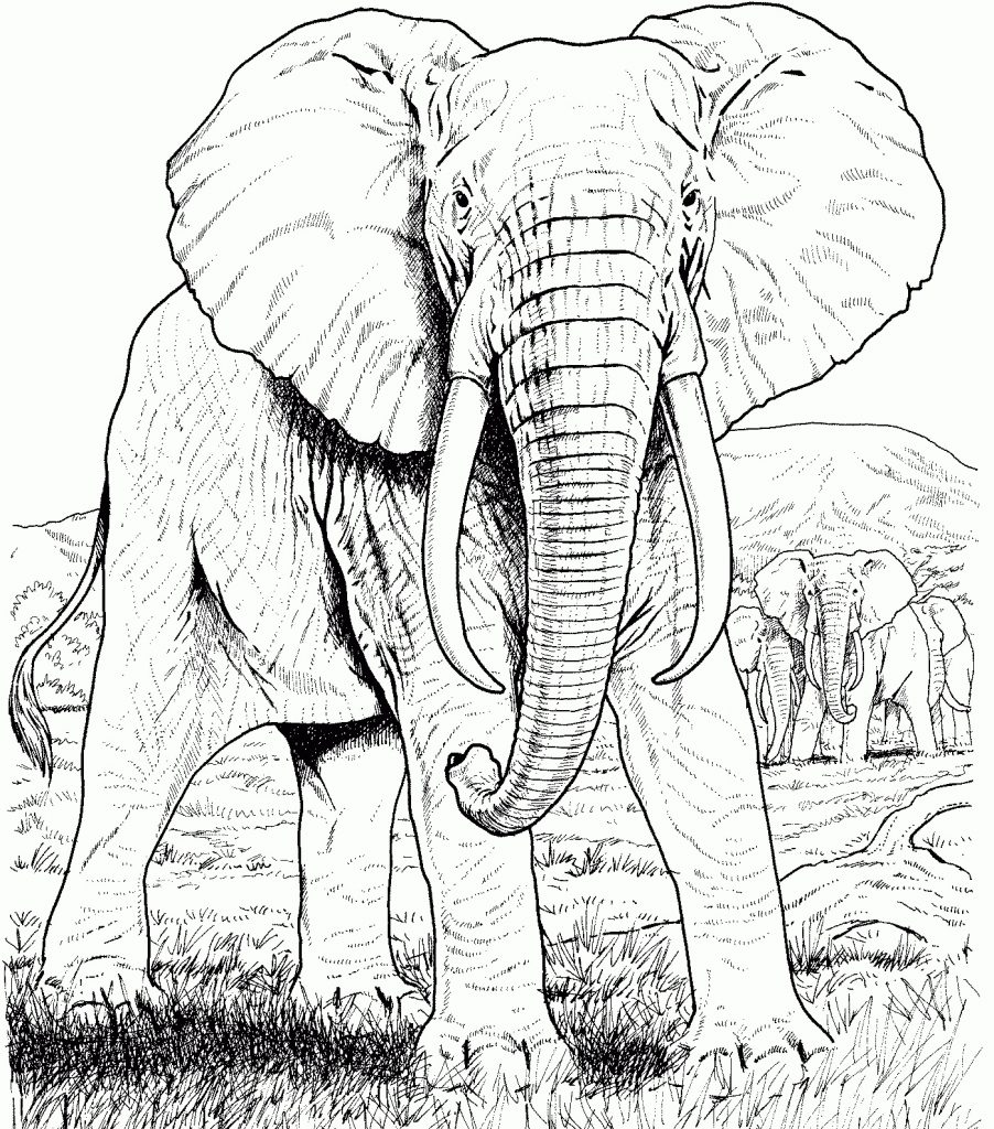 Elephant Coloring Pages for Adults - Best Coloring Pages ...