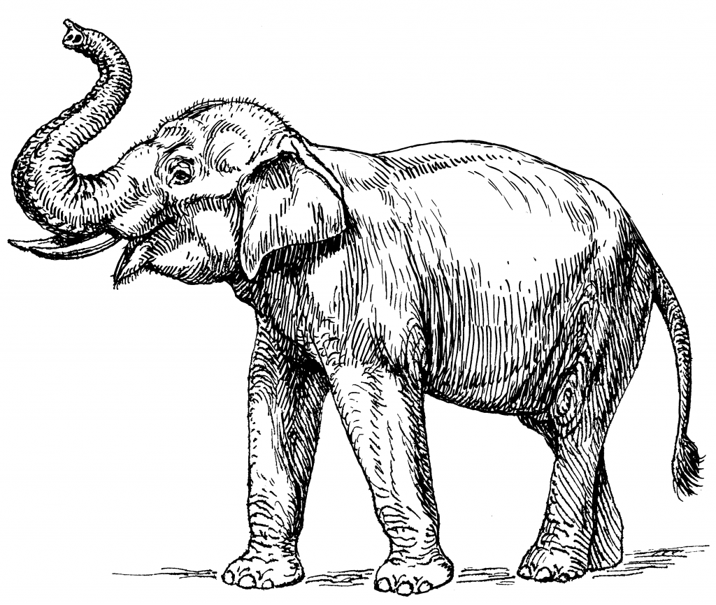 Realistic Elephant Coloring Page for Adults