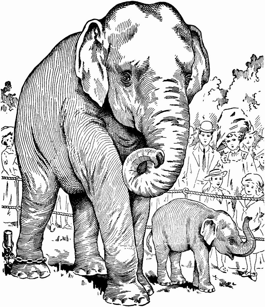 Realistic Elephant Mother and Child Coloring Sheet