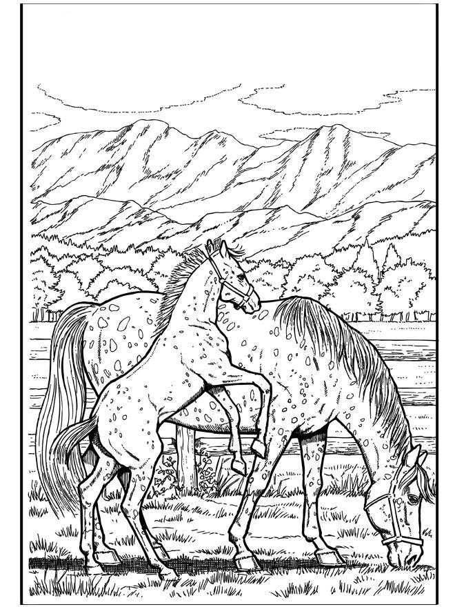 Horses Coloring Page for Adults