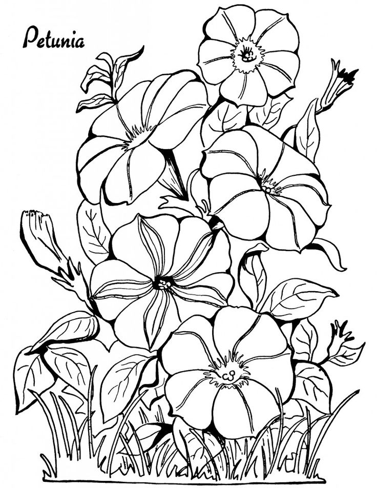 Petunia Floral Coloring Pages For Adults
