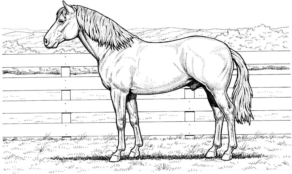 Realistic Horse Coloring Pages for Adults