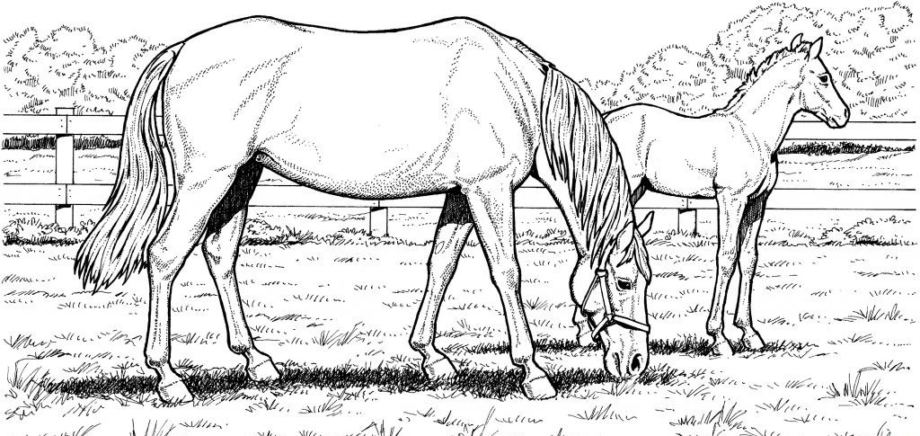 Realistic Horses Coloring Pages for Adults