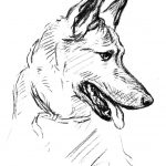 German Shepherd Dog Drawing Coloring