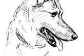 German Shepherd Dog Drawing Coloring