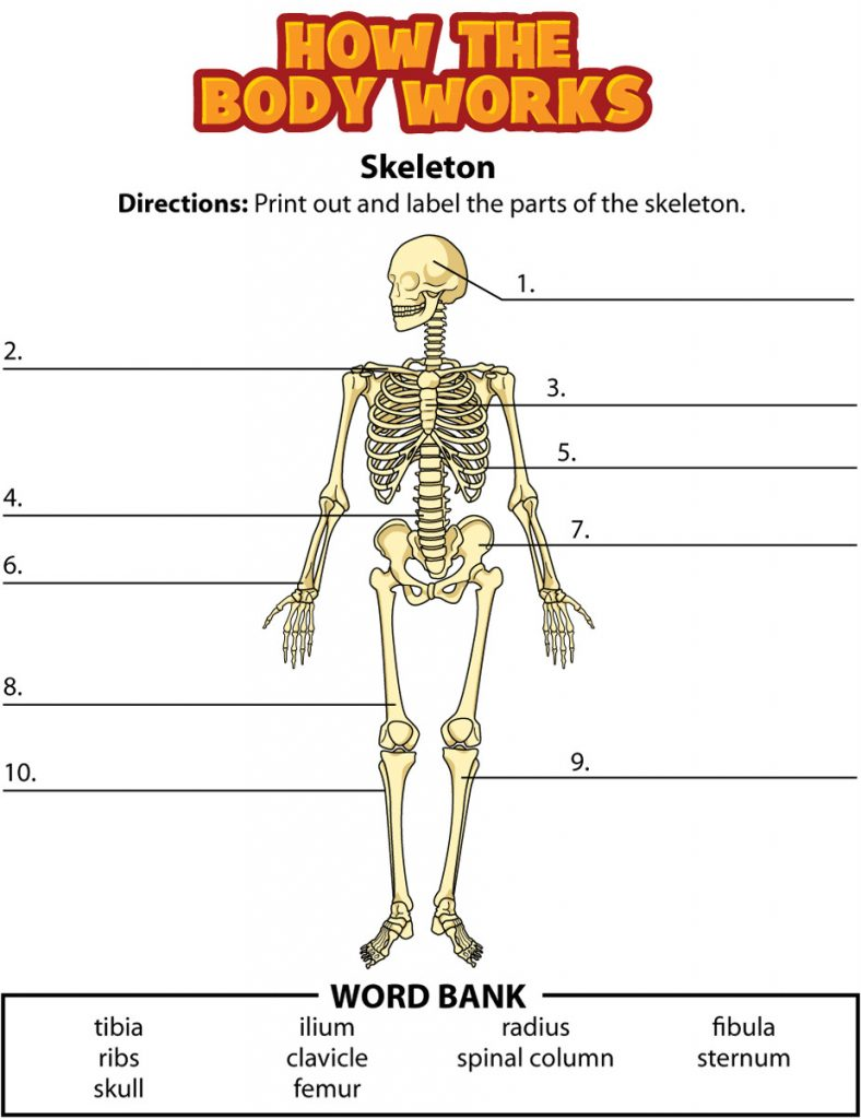 Homeschool Skeleton Worksheet