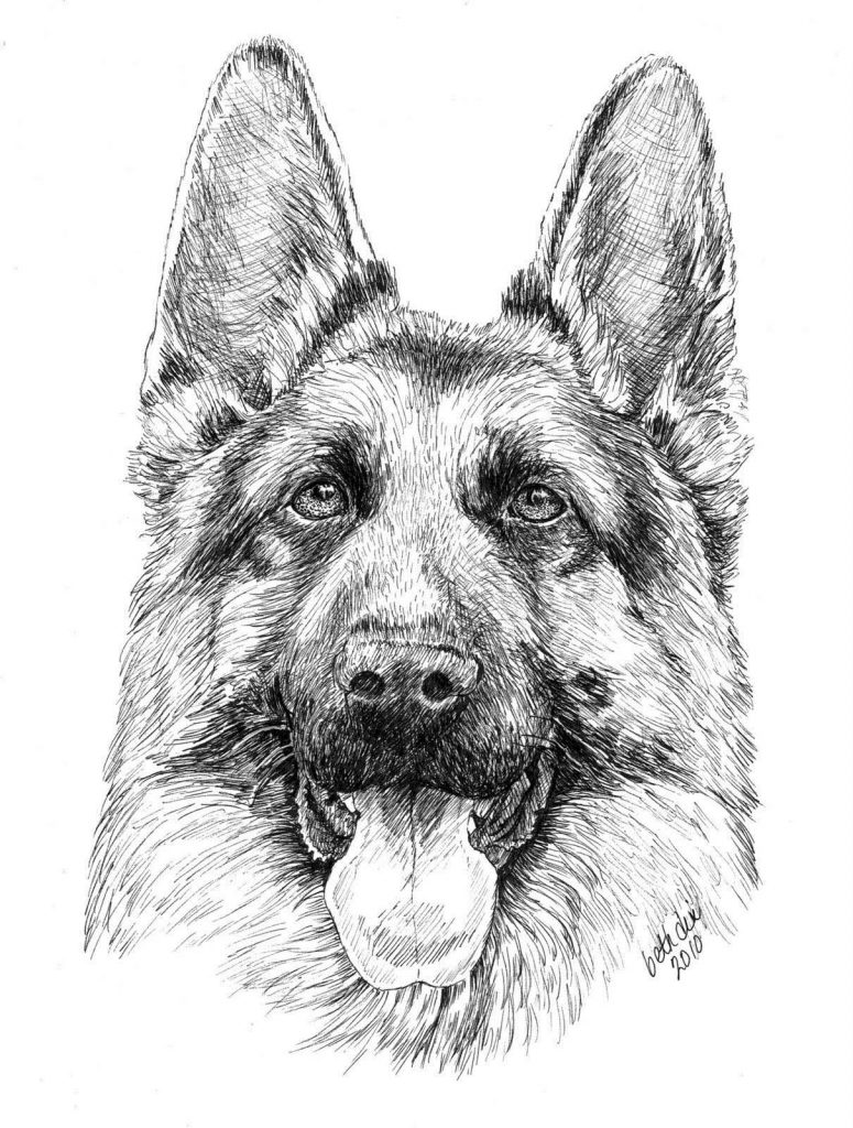 Realistic German Shepherd Drawing to Color