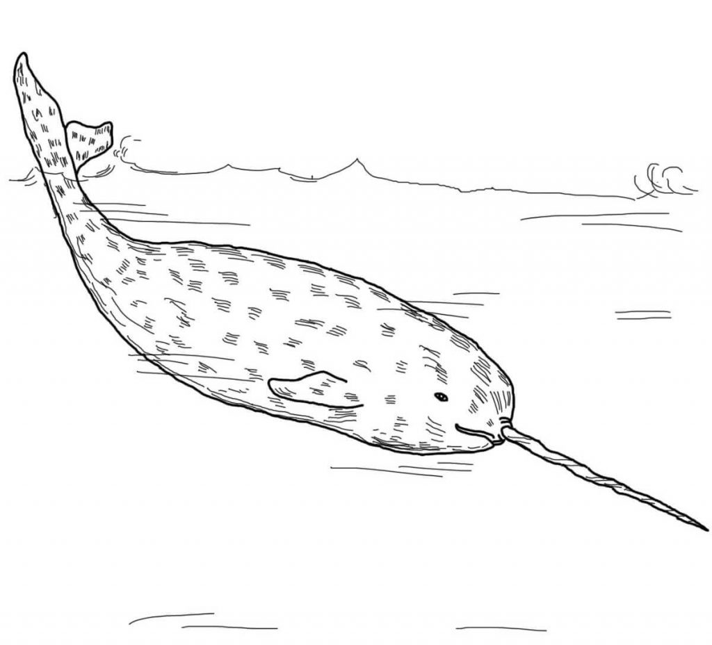 Realistic Narwhal Coloring Page