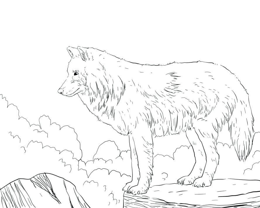 Realistic Wolf Adult Coloring Page