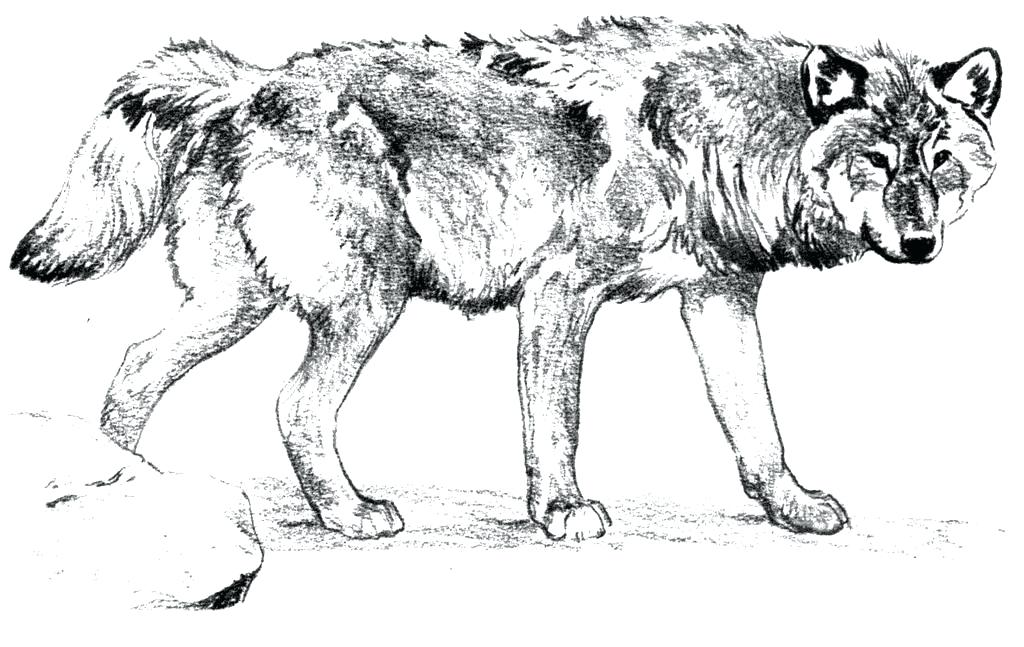 - Wolf Coloring Pages For Adults - Best Coloring Pages For Kids