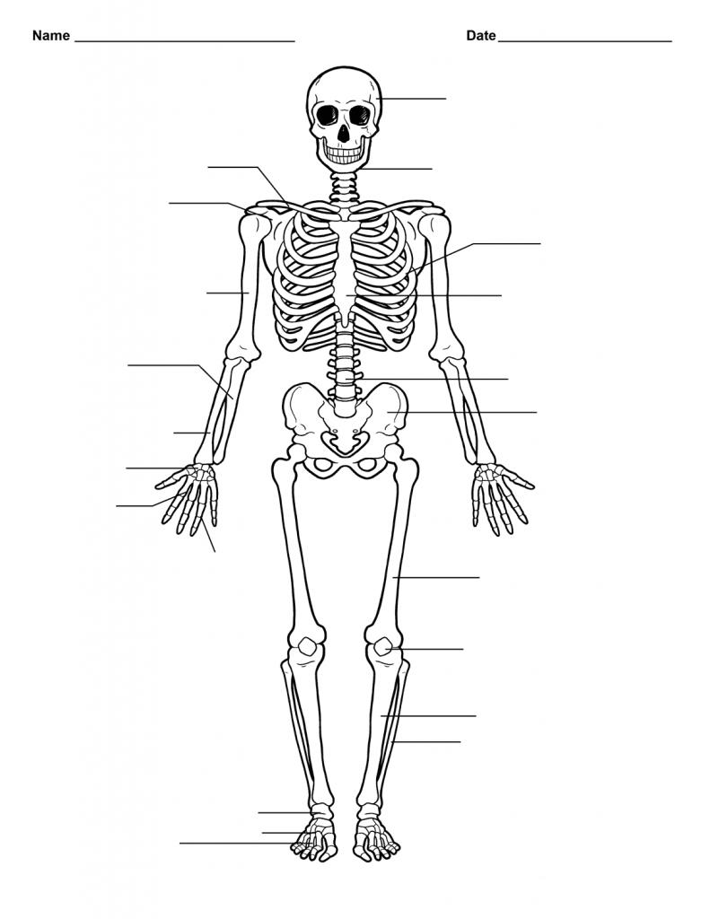Bones - 4th Grade Science Worksheet