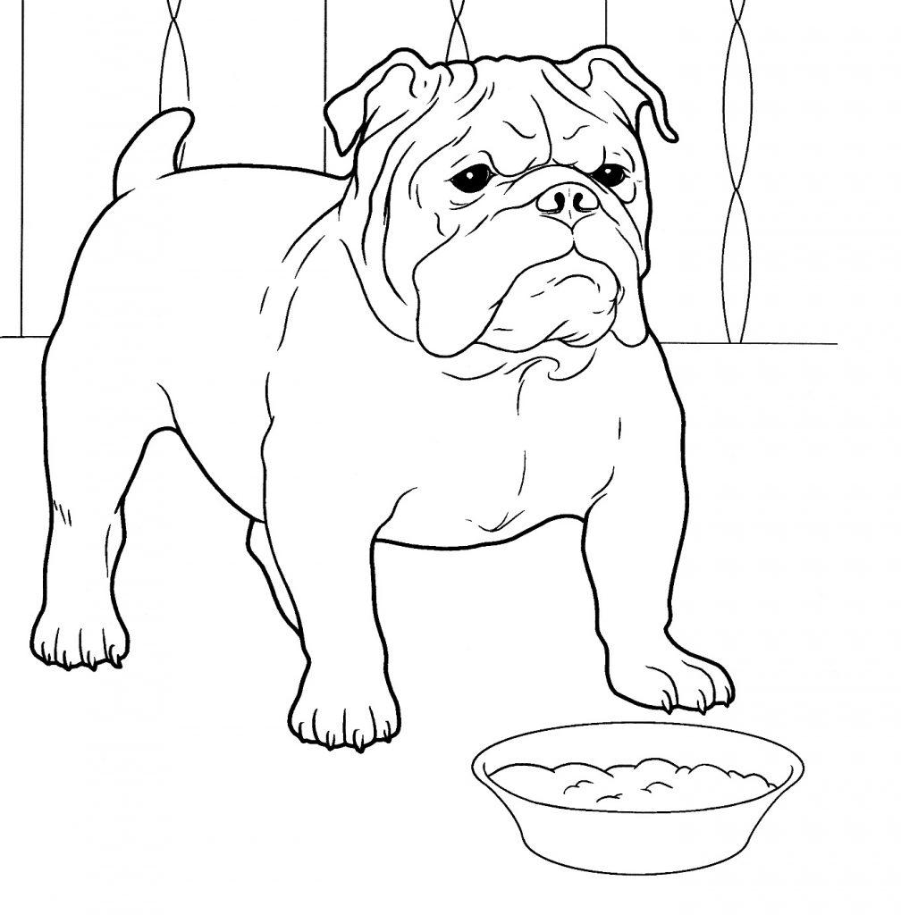 Bulldog Printable Coloring Pages
