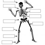 Skeleton - 4th Grade Science Worksheet