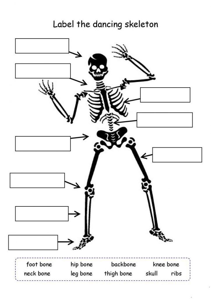 Skeleton - 4th Grade Science Worksheet