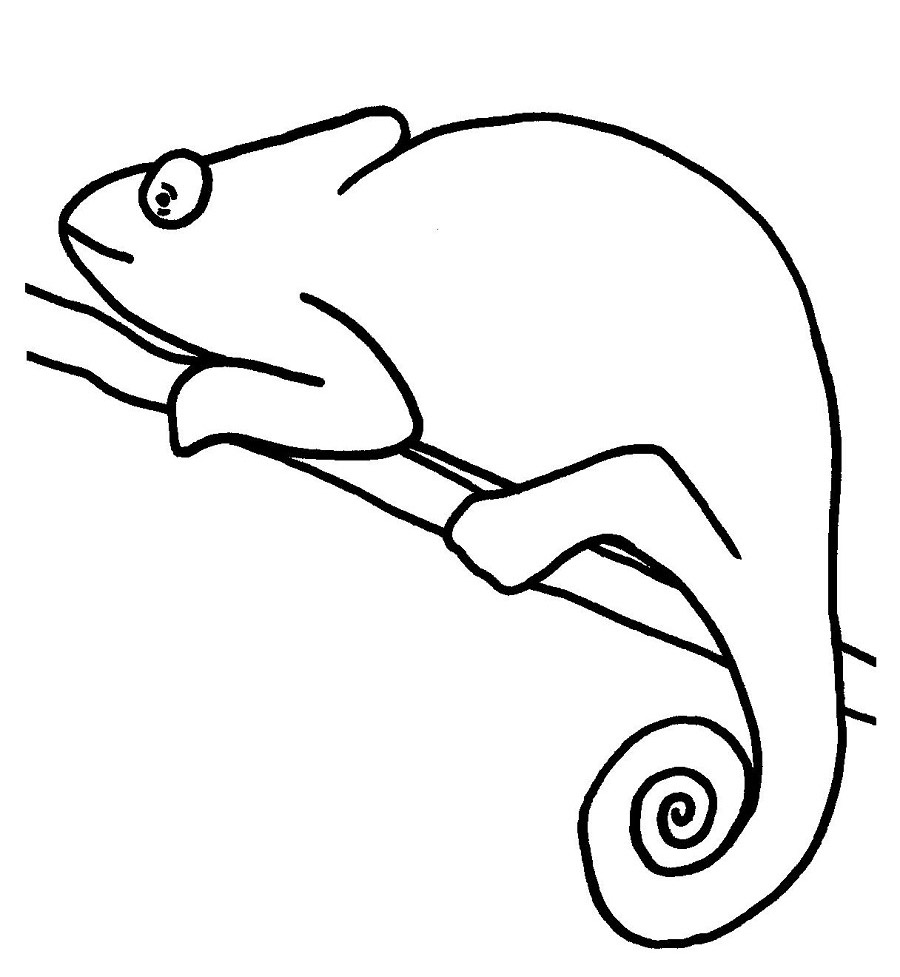 Chameleon Printable Coloring Pages