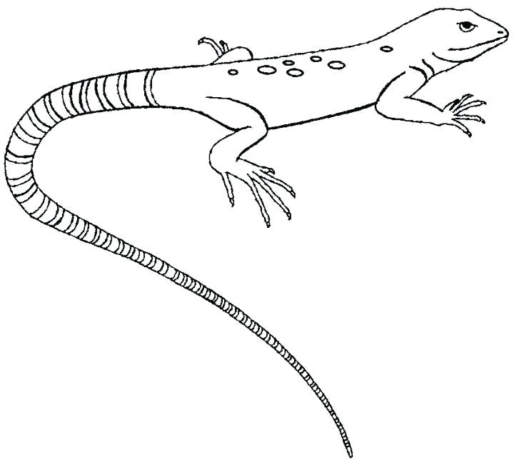 Common Gecko Coloring Pages