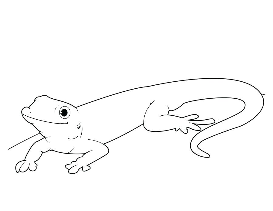 Cute Gecko Line Art for Coloring
