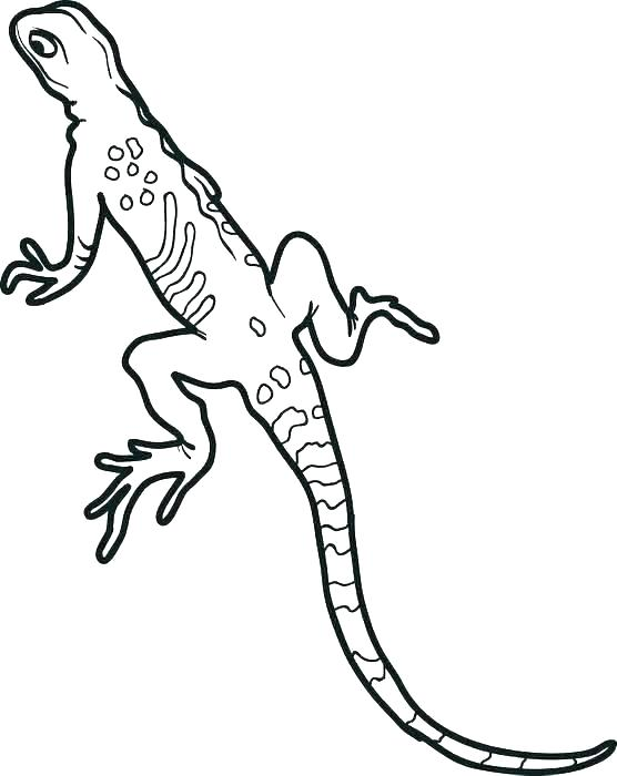 Free Gecko Coloring Page