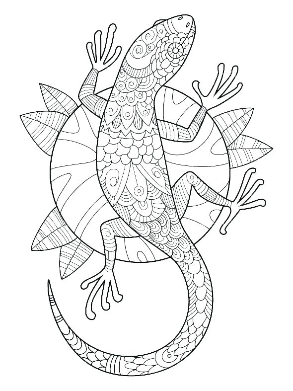 Gecko Coloring Pages for Adults
