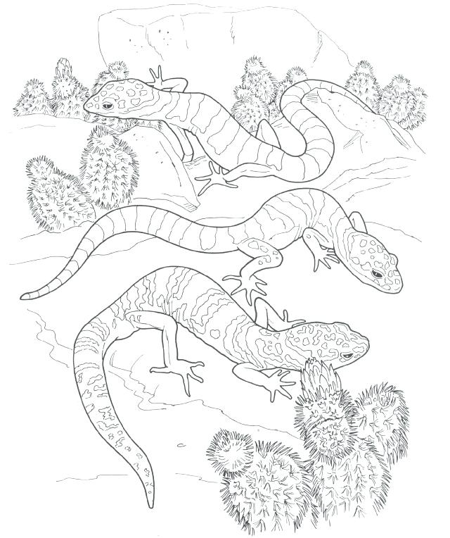 Gecko Lizards Coloring Pages