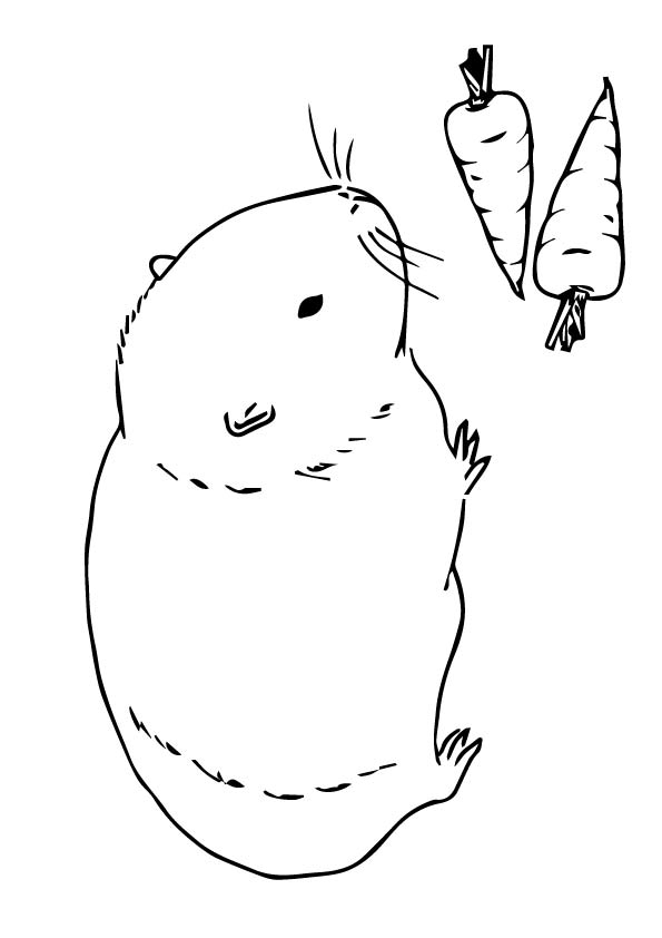 Guinea Pig and Carrots Coloring Page