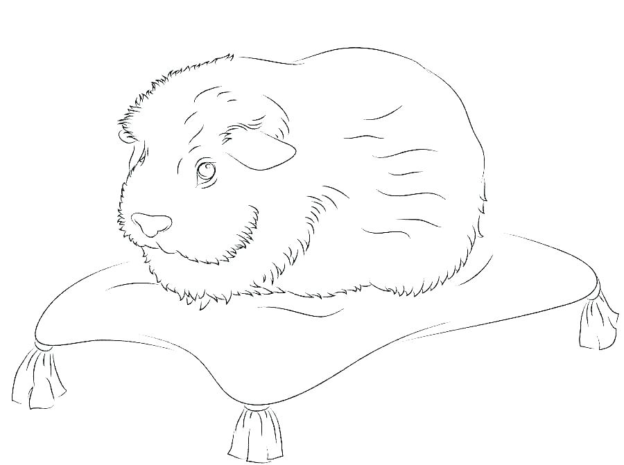 Guinea Pig on a Pillow Coloring Pages