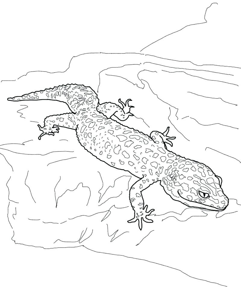 Lizard Gecko Coloring Pages